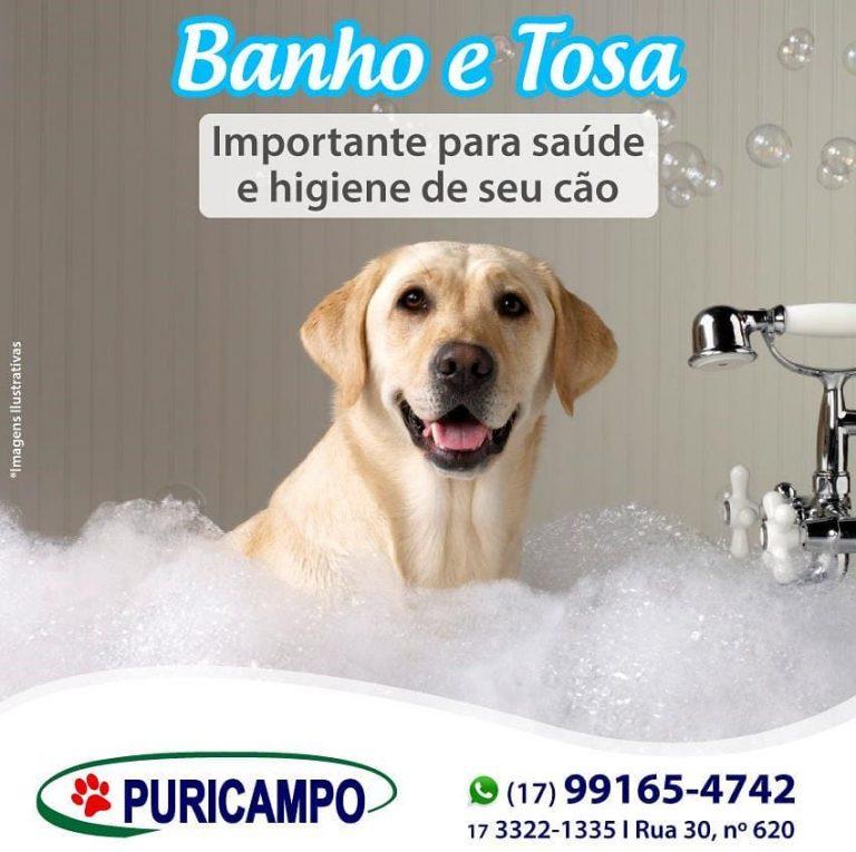 Além de deixar seu cão limpo, macio e mais bonito, o banho e tosa é muito import…