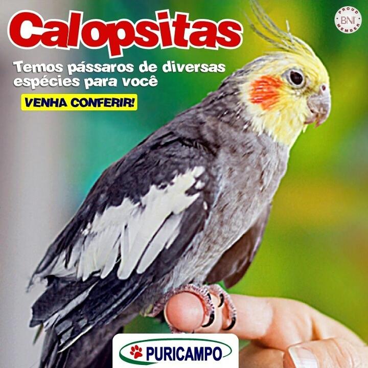Você gosta de pássaros?  Saiba que aqui na Puricampo temos pássaros lindos de di…