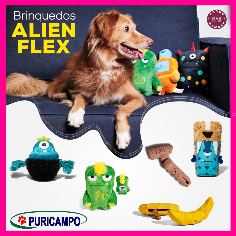 Brinquedos fofinhos, seguros e divertidos para seu cão brincar você encontra aqu…