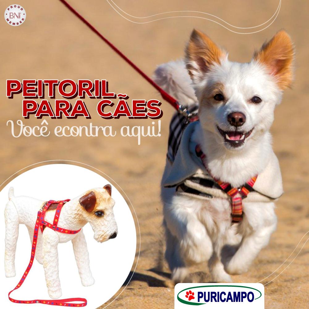 Os peitorais são ideais opções para seu cão passear repleto de estilo, seguro e …